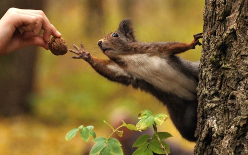 Squirrel recreates Michelangelo's painting of the creation of Adam...This hungry squirrel recreated Michelangelo's famous painting of the creation of Adam as it reached for a walnut...The hilarious snap was captured in a park and shows the furry critter clinging on to a tree while stretching for a snack...The stunning photo looks like the famous picture on the ceiling of the Sistine Chapel in which God gives Adam the spark of life through his fingers...Photographer Stanislav Duben, 33, took the photo of his 16 year-old-sister, Aneta, as she fed the squirrel...Stanislav Duben..Stanislav Duben/ Solent News & Photo Agency.UK +44 (0) 2380 458800.